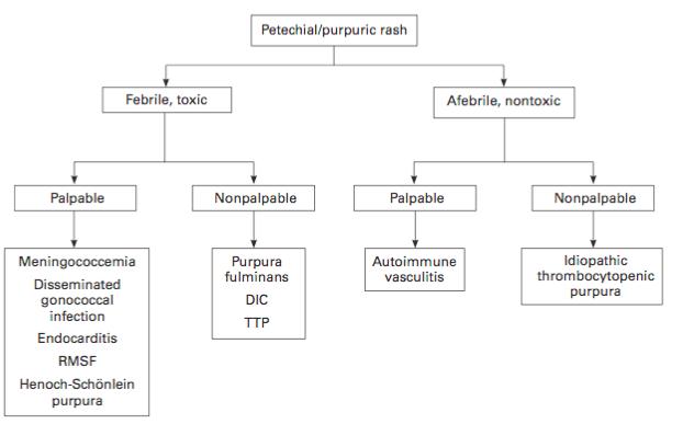 Petechial or purpuric rash workup pathway